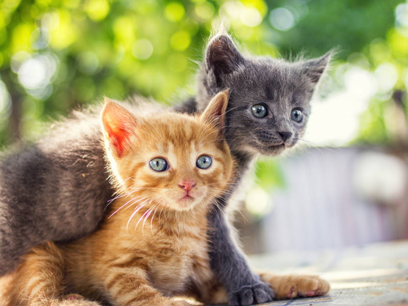 how to tell if a kitten has rabies