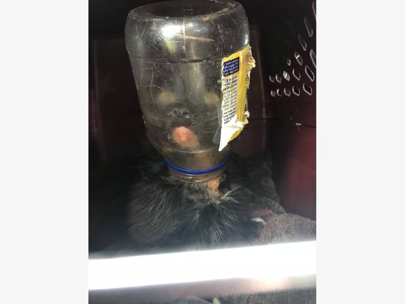 Cat Rescued with Head in a Jar