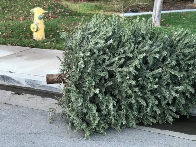Christmas Trees Bridgewater Nj