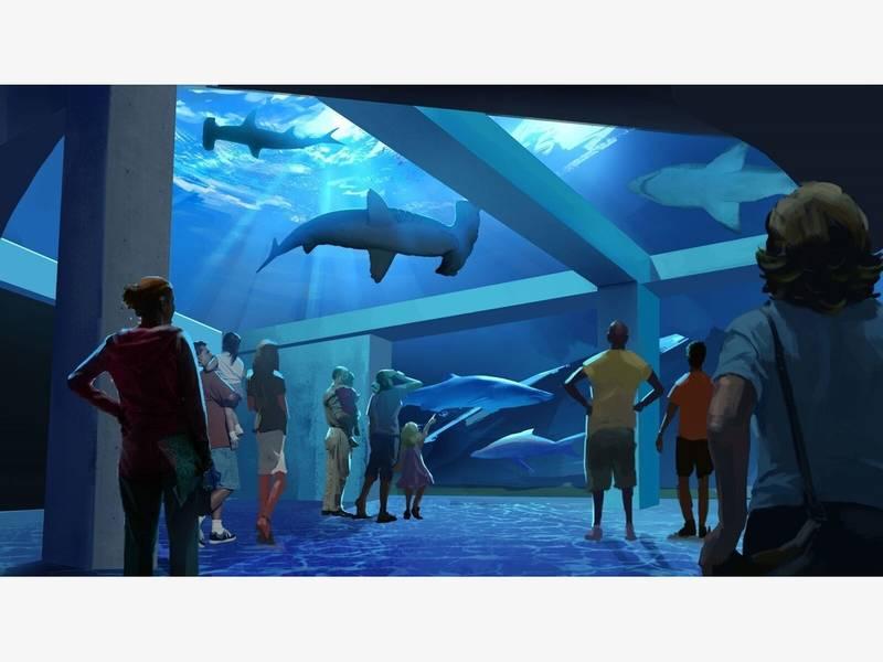 Georgia Aquarium Announces Major Expansion Plan
