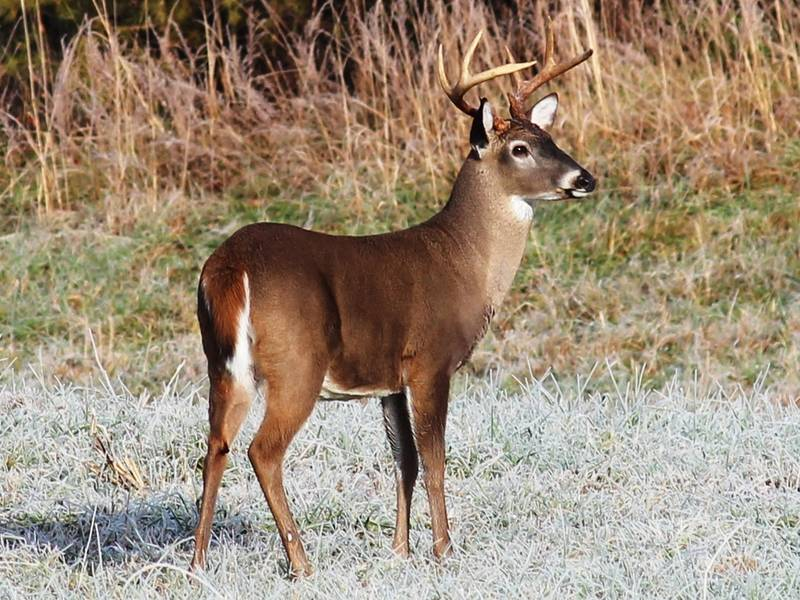 deer shooting over bait now legal throughout georgia smyrna ga patch