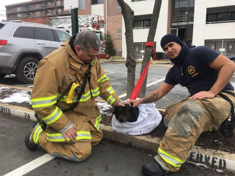 vigina hair styles firefighters rescue from arlington apartment 3627