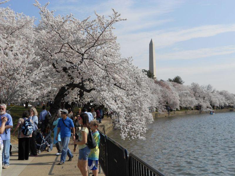 Cherry blossom dc dates in Perth