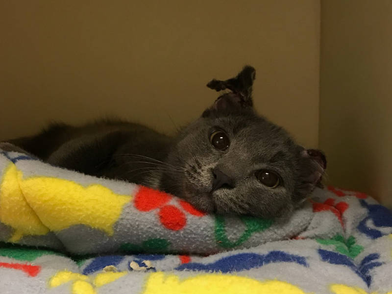 Cat Rescue Columbia Md