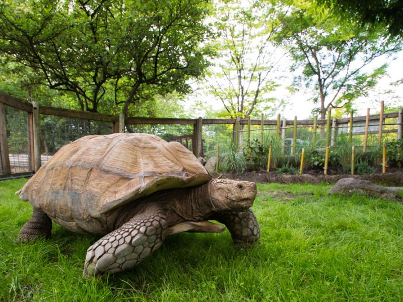 Oregon Zoo Welcomes New Tortoises | Portland, OR Patch