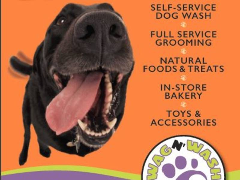 Wash your dirty dog for free in redmond enter to win redmond wa wash your dirty dog for free in redmond enter to win solutioingenieria Gallery