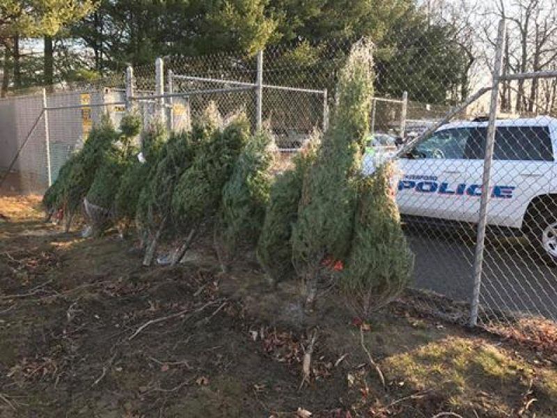 waterford police offering free christmas trees for needy families