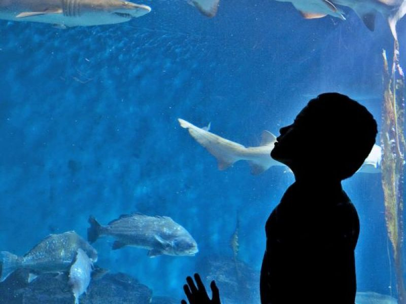 Maritime Aquarium To Hold 39 Sensory Friendly Morning