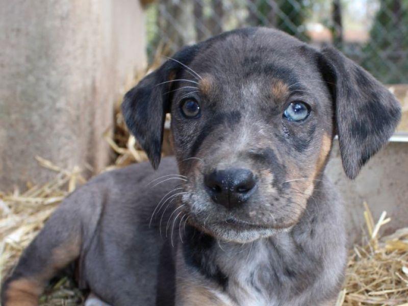 Cleveland Dog Rescue