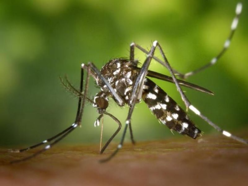 Malaria Vaccine Mosquirix Acts Against P Falrum The Most Deadly Parasite Mosquito Biting An Arm