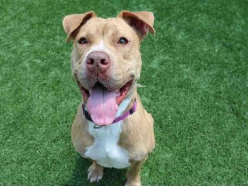 Big Dog Rescue Tampa Fl