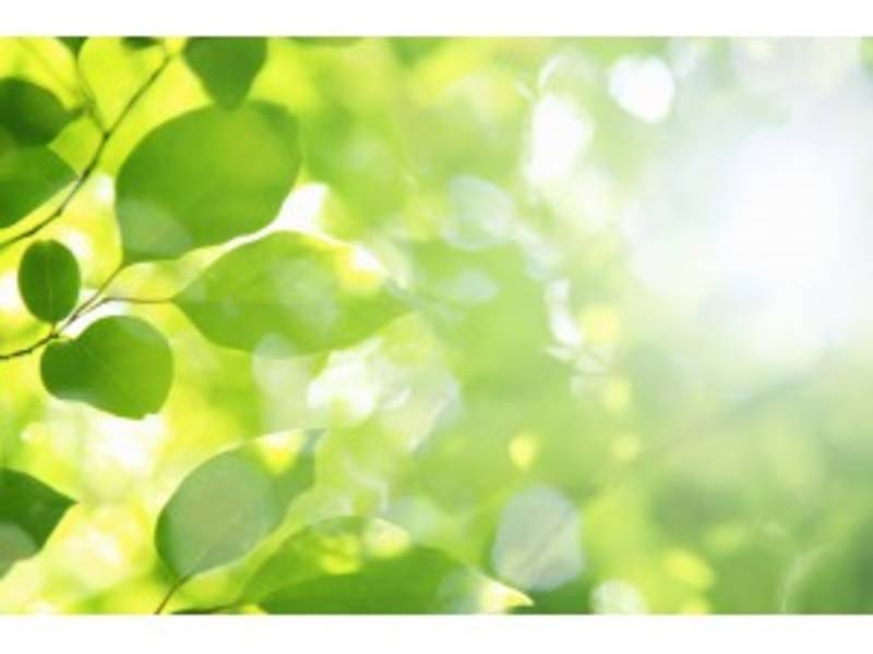 TD Bank Employees To Plant Trees At All People\'s Life Center ...