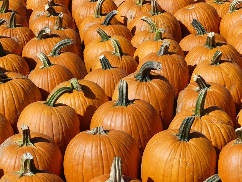 Florida Botanical Gardens To Host Pumpkin Fest. LARGO, FL ...