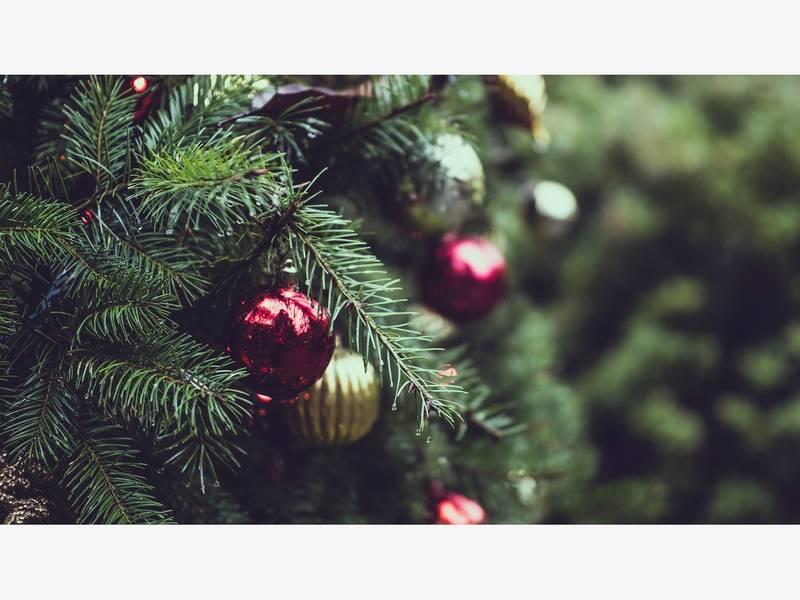 Pasco Offers Christmas Tree Recycling - Pasco Offers Christmas Tree Recycling Land O' Lakes, FL Patch