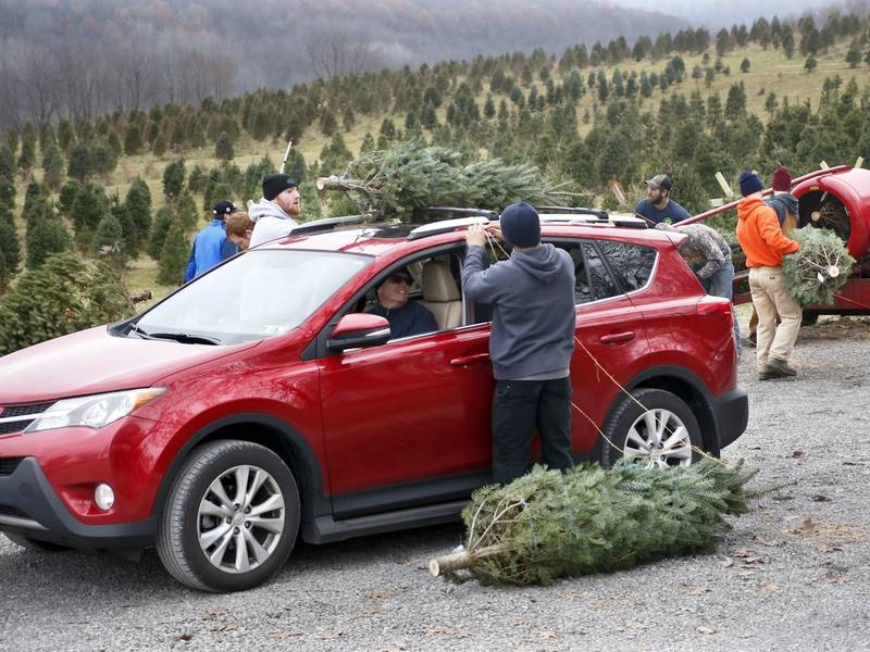 Best Christmas Tree Farm In Minnesota And Others You Can Visit - Best Christmas Tree Farm In Minnesota And Others You Can Visit