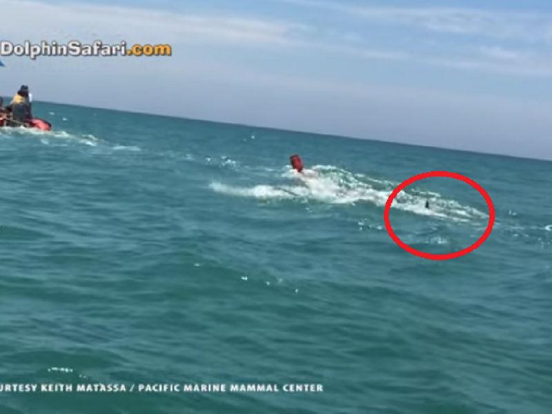 Watch shark attacks buoy in dana point laguna niguel for Dana point pier fishing
