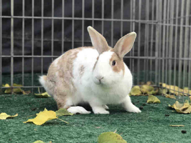 Riley The Rabbit Available For Adoption In Mission Viejo Mission