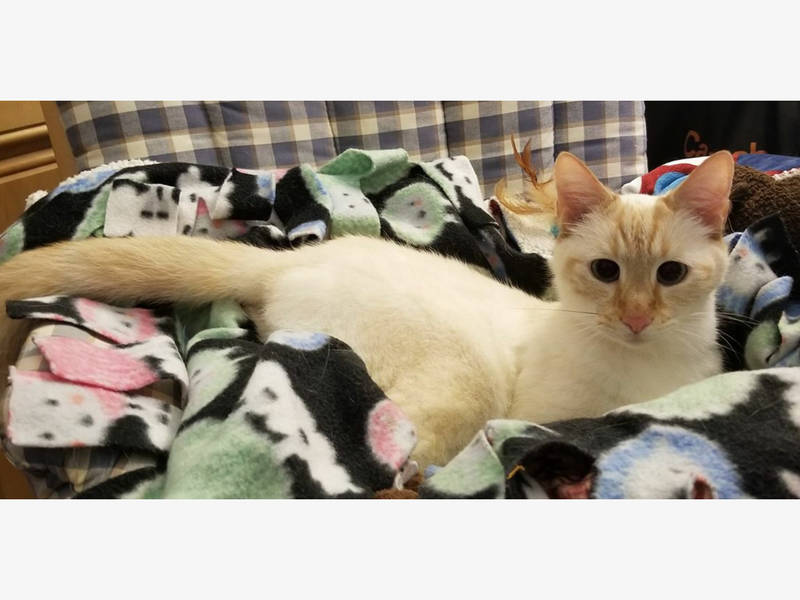 Hundreds Of Cats Found In Lake Forest Hoarding House