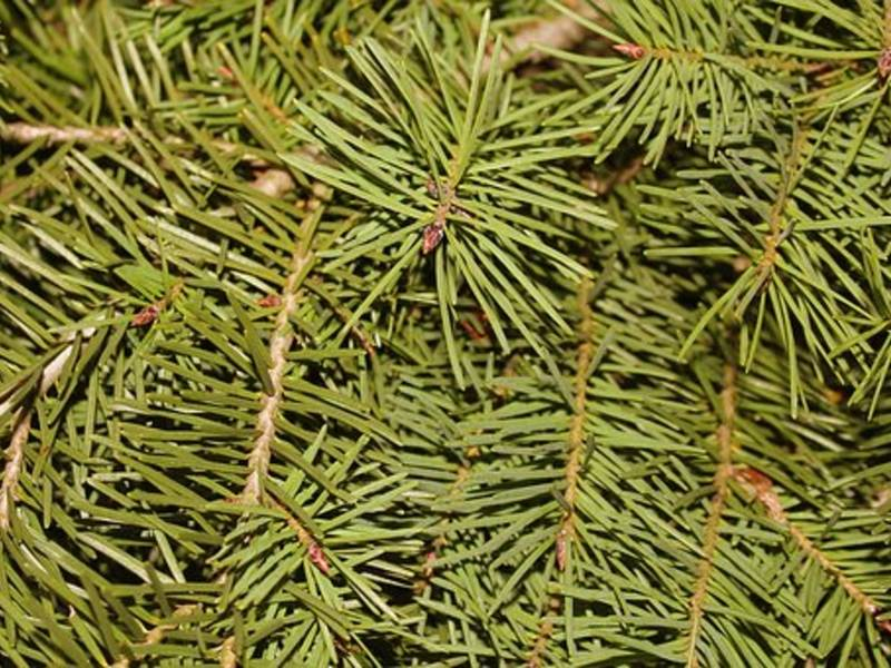 How To Get Rid Of Christmas Trees In Ashburn Area