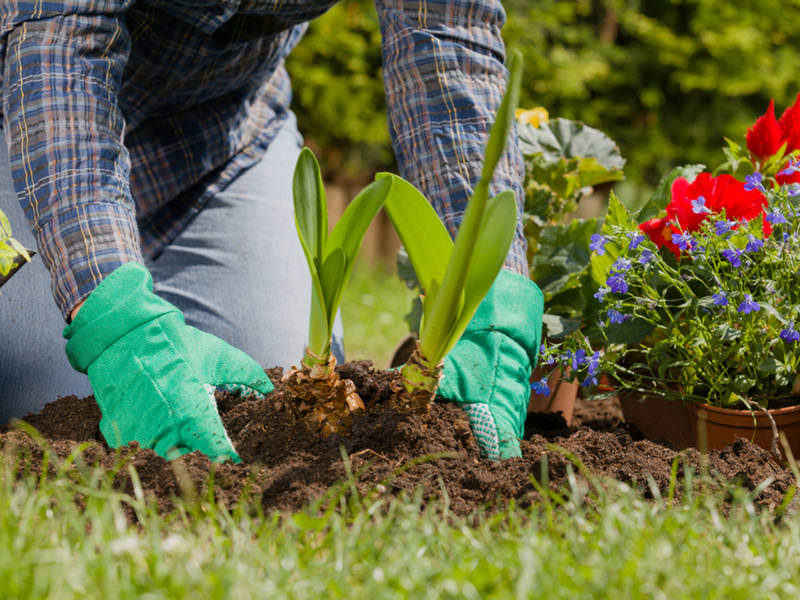 Home Checklist: Spring Gardening Tips