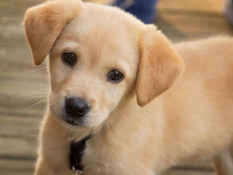 4 Great Pet Groomers In Silver Spring According To Yelpers Silver
