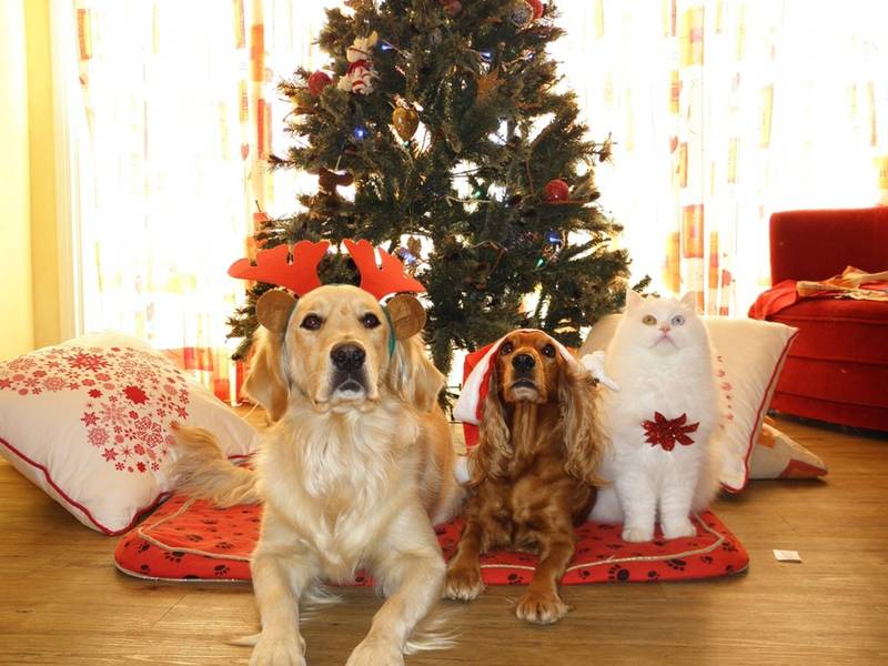 Holiday Pet Safety Tips From Takoma Park Police