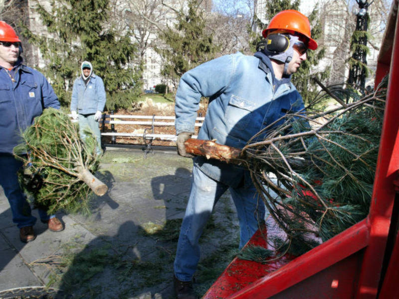 How To Get Rid Of Christmas Trees In Silver Spring | Silver Spring ...
