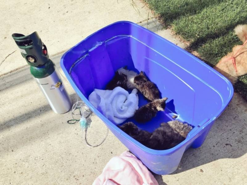 Cat Rescue Montgomery County Maryland