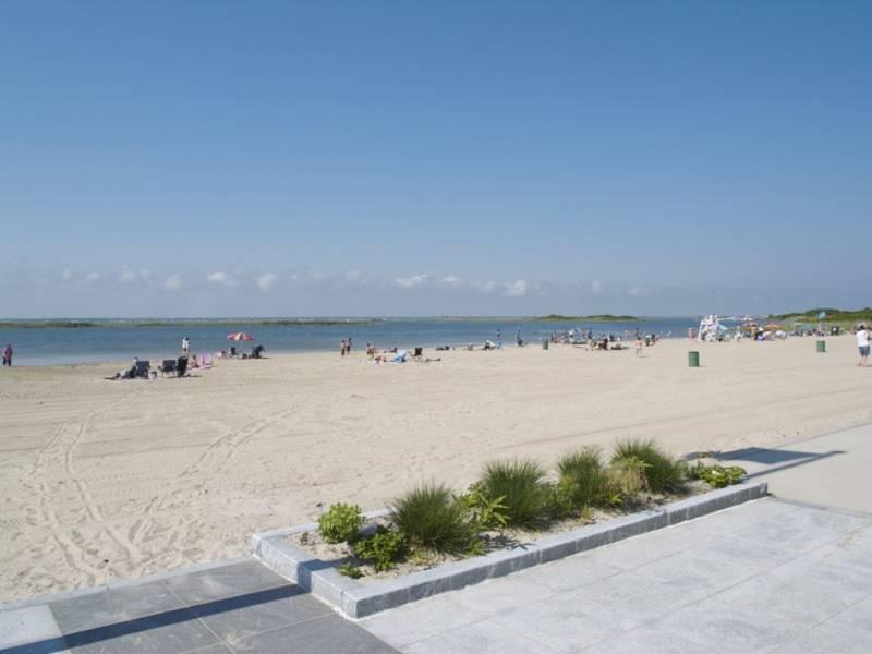 Volunteers Needed To Help Preserve Tobay Beach