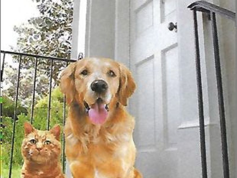 Free Cat Levittown Pa
