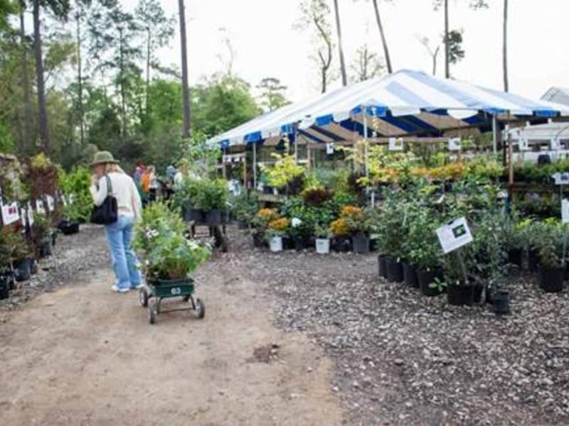 Mercer Botanic Gardens Announces March Plant Sale Humble Tx Patch