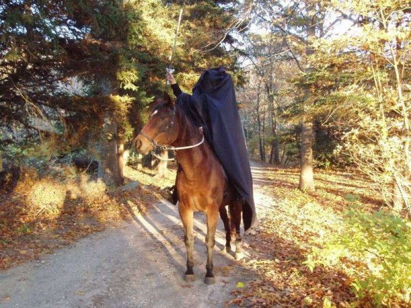 Horse play festival set for sunday north kingstown ri patch horse play festival set for sunday m4hsunfo