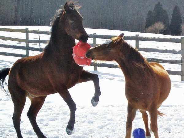 play horse