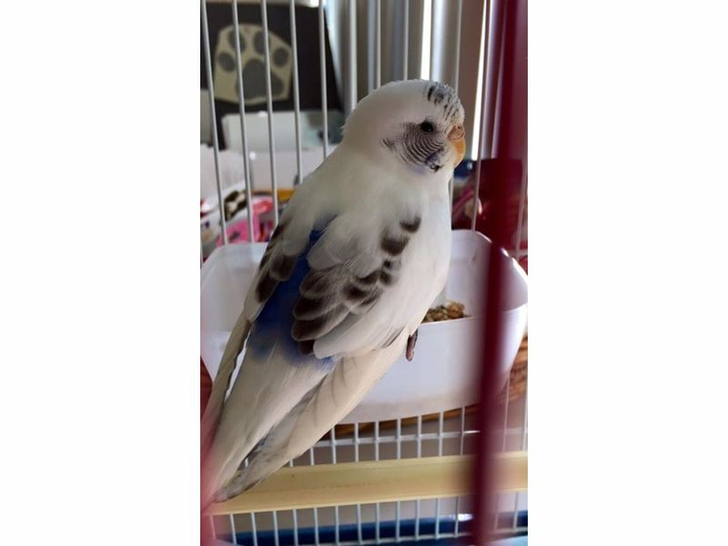 Parakeet Found In Parsippany | Parsippany, NJ Patch