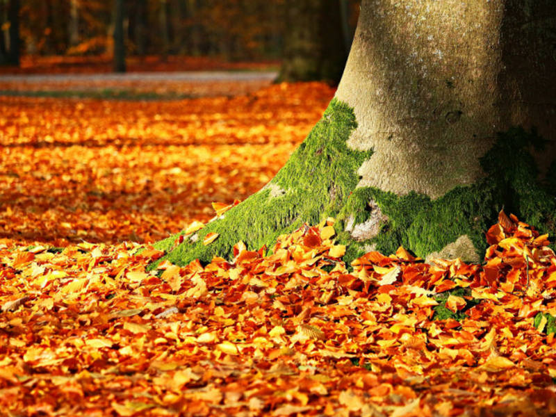 How To Make A Fall Leaf Collection