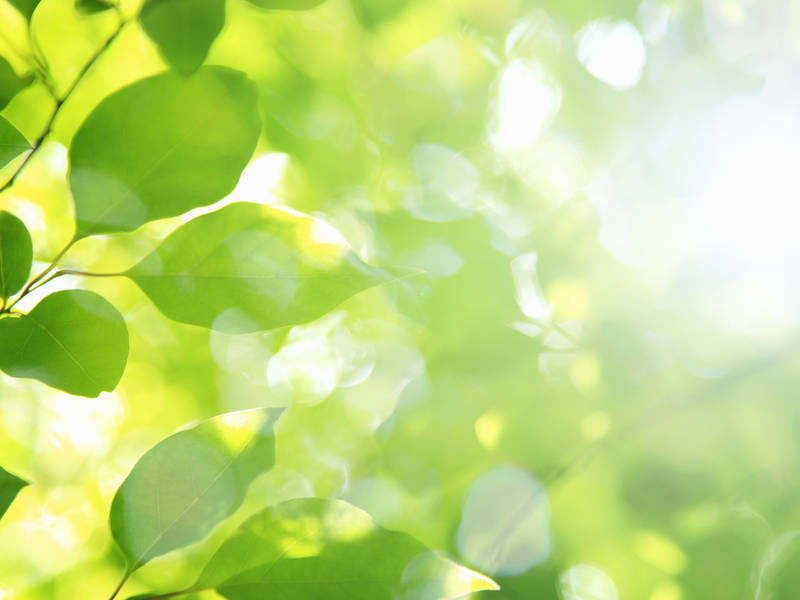 Malvern Borough Offering Free Shade Trees For Fall