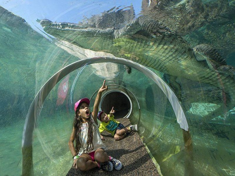 Zoo Miami S Everglades Exhibit Lets You Crawl With The Crocodiles