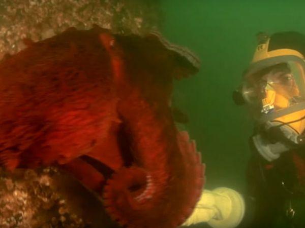 Seattle Aquarium Cancels Octopus Date After Female Lays