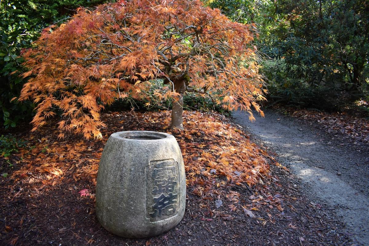 Seattle\'s Kubota Garden Is On Fire This Autumn   Seattle, WA Patch