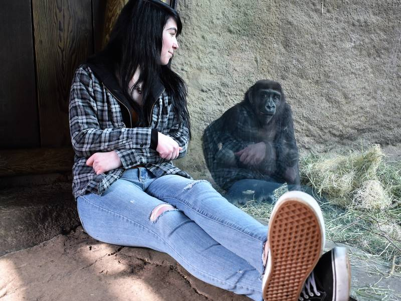 A Life At Woodland Park Zoo Inspires Woman To Study Primates