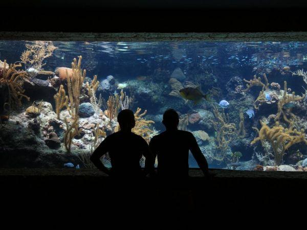 Maritime Aquarium Hosts 39 South Norwalk Celebration