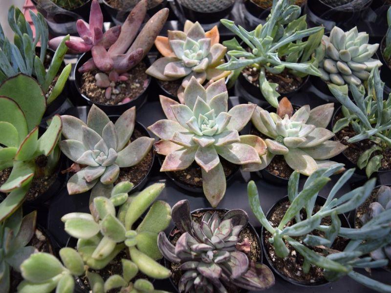 Living Desert Hosts Plant Sale Featuring Rare Desert ...