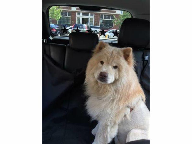 Craigslist pittsburgh free pets