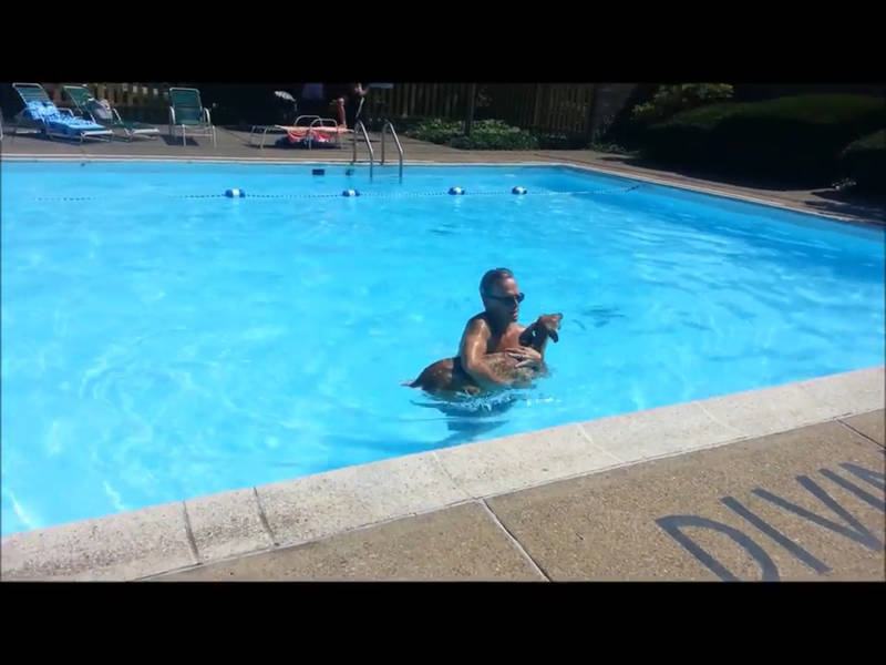 Video Man Rescues Deer In Suburban Pittsburgh Pool North Hills Pa Patch