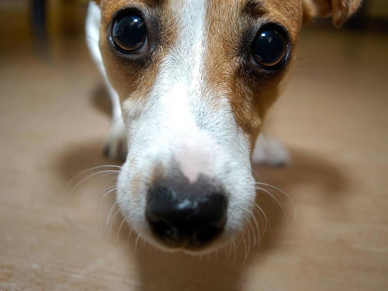 Adopt A Dog Detroit Michigan