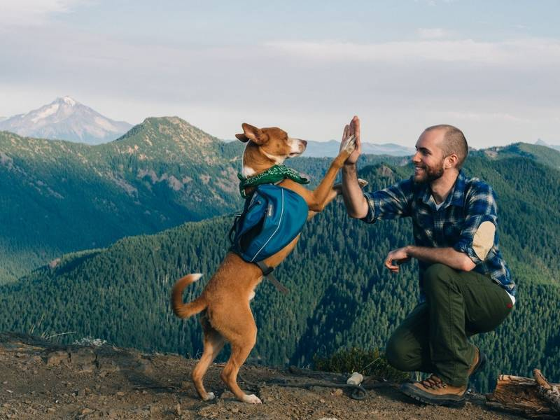 Best Places To Go In Portland With A Dog