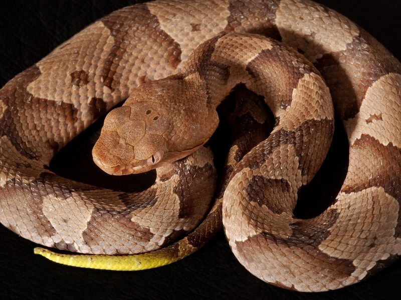 Know Your Snakes Here S A Guide To Common Snakes In