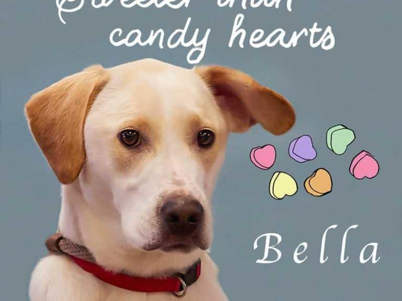 Rescue Dog Bella Could Be Your Valentine Mooresville Nc Patch