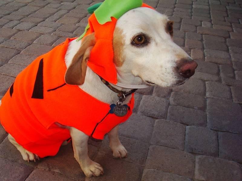 3 halloween events with your dog in alexandria - Halloween Events Virginia