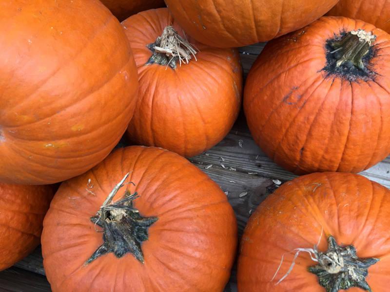 Oct 27 | manassas holiday crafts, desserts & sweets | manassas, va.